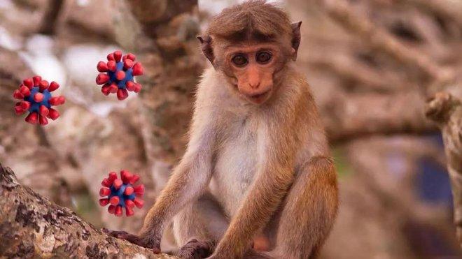 Trung Quốc lại báo cáo một virus lây từ khỉ sang người, nạn nhân đầu tiên đã tử vong - Ảnh 4.