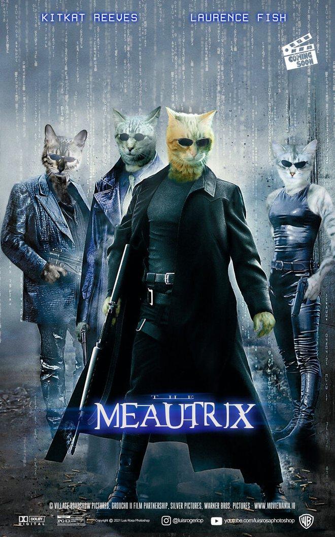 [Chùm ảnh vui] Sẽ thế nào nếu các boss chó mèo thay con người thủ vai chính trong những bộ phim đình đám thế giới? - Ảnh 2.