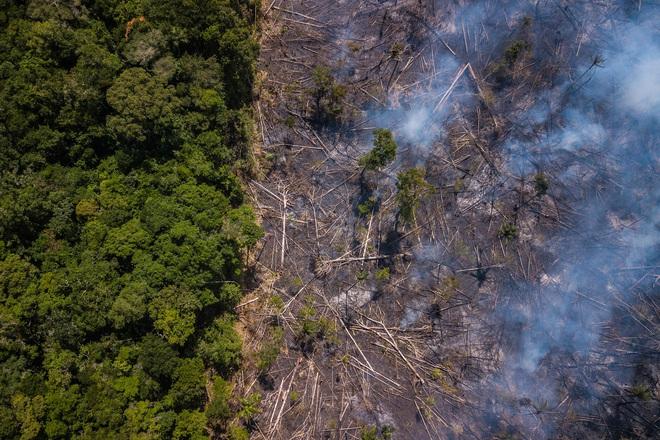 Chỉ với 4 thập kỷ khai phá, con người đã chấm dứt 55 triệu năm hấp thụ carbon của rừng Amazon - Ảnh 1.