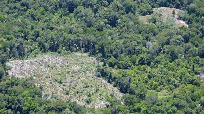 Chỉ với 4 thập kỷ khai phá, con người đã chấm dứt 55 triệu năm hấp thụ carbon của rừng Amazon - Ảnh 3.