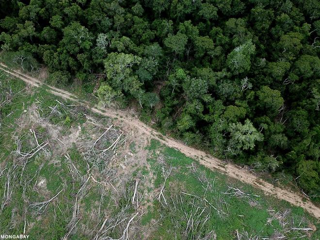 Chỉ với 4 thập kỷ khai phá, con người đã chấm dứt 55 triệu năm hấp thụ carbon của rừng Amazon - Ảnh 5.