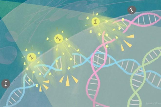Xạ trị bằng hiệu ứng lượng tử giúp tiêu diệt tế bào ung thư chỉ trong 3 ngày - Ảnh 3.
