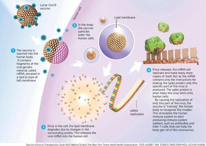 Vắc-xin COVID-19 mRNA đầu tiên có thể đông khô, không cần bảo quản lạnh để giảm giá thành mà vẫn giữ được hiệu quả cao - Ảnh 2.