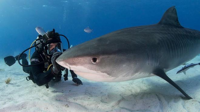 Kẻ săn mồi trở thành con mồi: Hàng trăm triệu con cá mập đối mặt với các chuyến đi săn đẫm máu của con người mỗi năm - Ảnh 1.