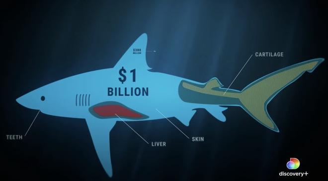 Kẻ săn mồi trở thành con mồi: Hàng trăm triệu con cá mập đối mặt với các chuyến đi săn đẫm máu của con người mỗi năm - Ảnh 3.