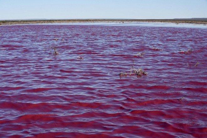 Đang yên đang lành, một đầm phá ở Argentina bỗng nhiên chuyển sang màu hồng - Ảnh 4.