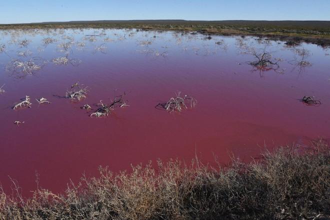 Đang yên đang lành, một đầm phá ở Argentina bỗng nhiên chuyển sang màu hồng - Ảnh 3.