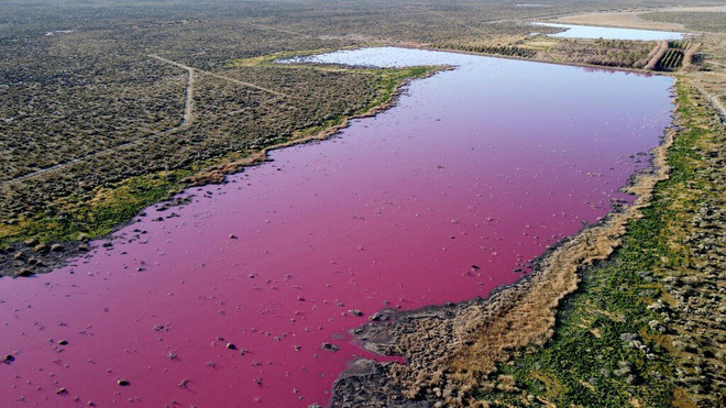 Đang yên đang lành, một đầm phá ở Argentina bỗng nhiên chuyển sang màu hồng - Ảnh 2.