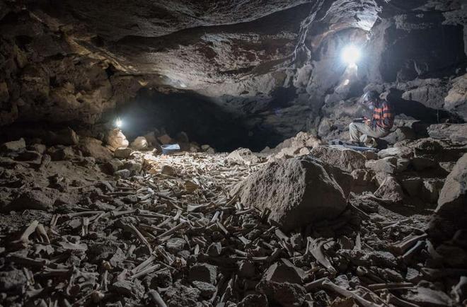Phát hiện hang động chứa đầy xương được linh cẩu cất giấu trong hàng nghìn năm qua, có cả xương người tiền sử - Ảnh 1.