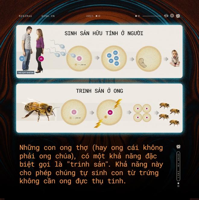 Một con ong ở Châu Phi đã tự nhân bản nó hàng triệu lần kể từ năm 1990 tới nay và tạo ra một đội quân clone bất tử - Ảnh 3.