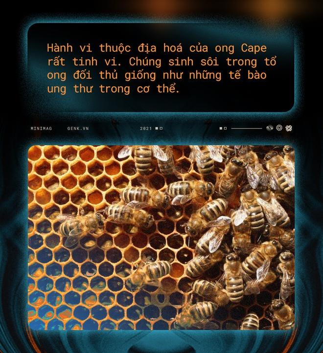 Một con ong ở Châu Phi đã tự nhân bản nó hàng triệu lần kể từ năm 1990 tới nay và tạo ra một đội quân clone bất tử - Ảnh 9.