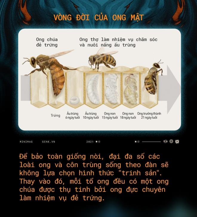 Một con ong ở Châu Phi đã tự nhân bản nó hàng triệu lần kể từ năm 1990 tới nay và tạo ra một đội quân clone bất tử - Ảnh 4.