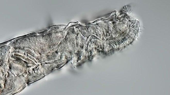 Các nhà khoa học Nga hồi sinh zombie 24.000 năm tuổi - Ảnh 3.