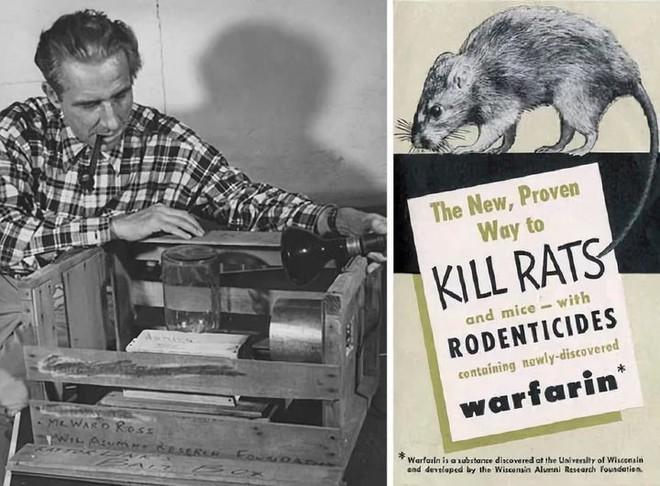 Thứ thuốc chuột từng chữa lành bệnh tim cho tổng thống Mỹ có thể ngăn ngừa cả ung thư - Ảnh 12.