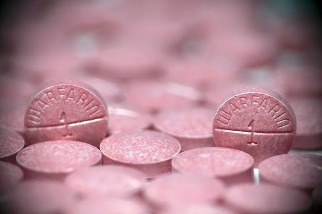 Thứ thuốc chuột từng chữa lành bệnh tim cho tổng thống Mỹ có thể ngăn ngừa cả ung thư - Ảnh 2.