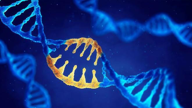 Nghiên cứu DNA chỉ ra rằng, chỉ ít hơn 2% trong gen con người thực sự là con người - Ảnh 1.