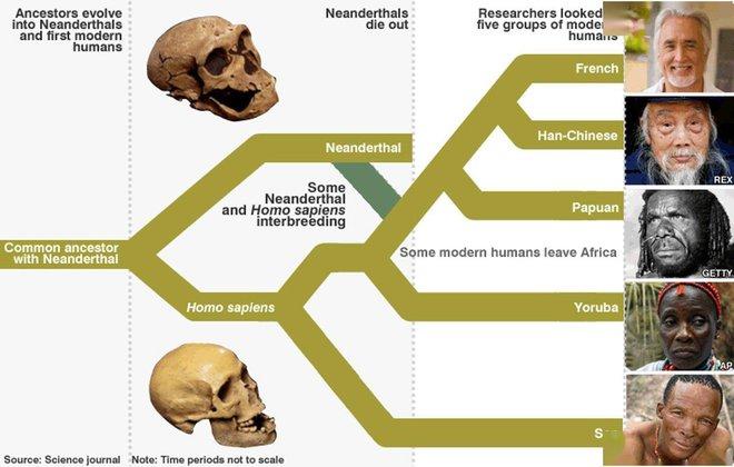 Nghiên cứu DNA chỉ ra rằng, chỉ ít hơn 2% trong gen con người thực sự là con người - Ảnh 4.