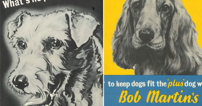 Kinh hoàng vụ thảm sát vật nuôi năm 1939 ở Anh: 750.000 thú cưng bị hóa kiếp chỉ trong 1 tuần - Ảnh 1.