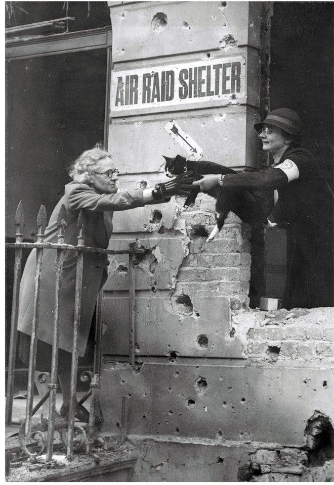 Kinh hoàng vụ thảm sát vật nuôi năm 1939 ở Anh: 750.000 thú cưng bị hóa kiếp chỉ trong 1 tuần - Ảnh 9.