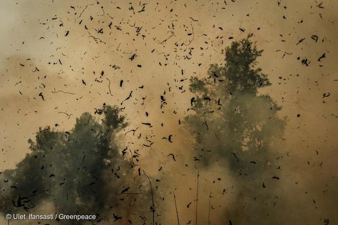 Khói cháy rừng khiến con người dễ nhiễm COVID-19 hơn nhưng chúng ta lại không thể trốn chạy khỏi chúng - Ảnh 2.