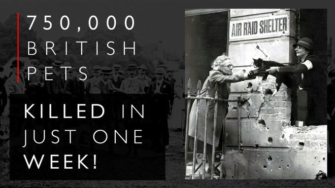 Kinh hoàng vụ thảm sát vật nuôi năm 1939 ở Anh: 750.000 thú cưng bị hóa kiếp chỉ trong 1 tuần - Ảnh 11.
