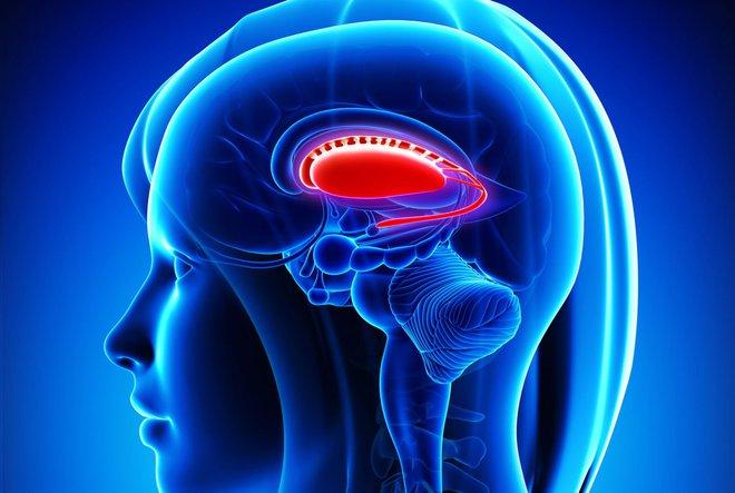 Trí tuệ nhân tạo sẽ khó đả bại loài người bằng vũ lực, xóa bỏ não bộ và xâm chiếm cơ thể sẽ dễ dàng hơn nhiều - Ảnh 1.