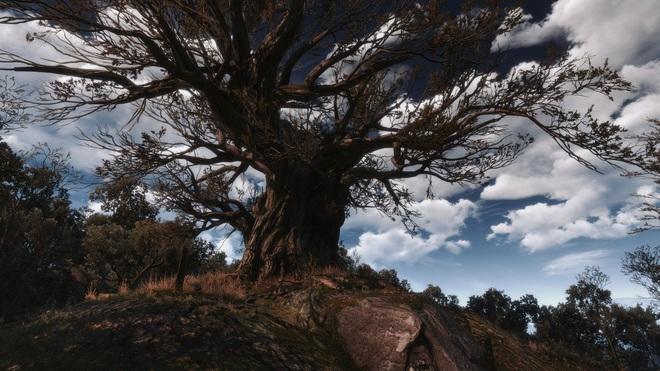 Cây đại thụ nhiều trăm năm tuổi tại Ba Lan được đặt tên theo nhân vật của series The Witcher - Ảnh 1.