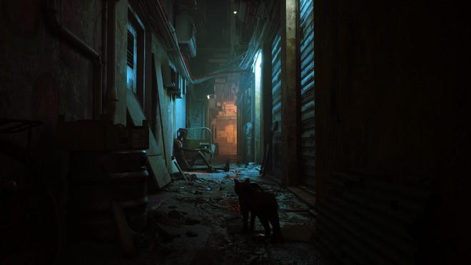Giới thiệu game Stray: người chơi vào vai một chú mèo, phiêu lưu trong một thành phố robot bị lãng quên - Ảnh 3.