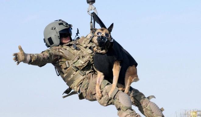American Humane: Những con chó phục vụ bị quân đội Mỹ bỏ lại ở Afghanistan sẽ phải chịu số phận tệ hơn cái chết - Ảnh 3.