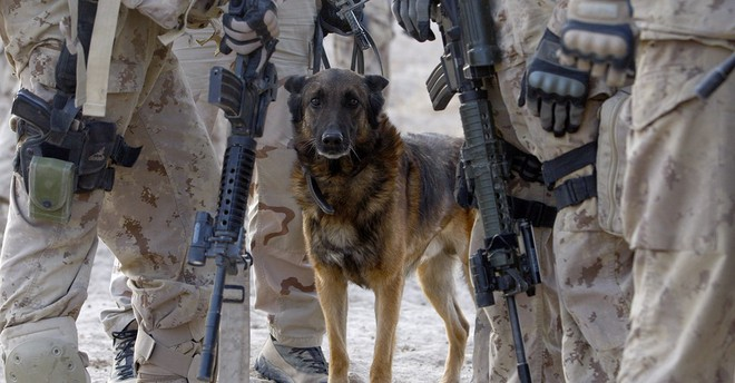 American Humane: Những con chó phục vụ bị quân đội Mỹ bỏ lại ở Afghanistan sẽ phải chịu số phận tệ hơn cái chết - Ảnh 6.