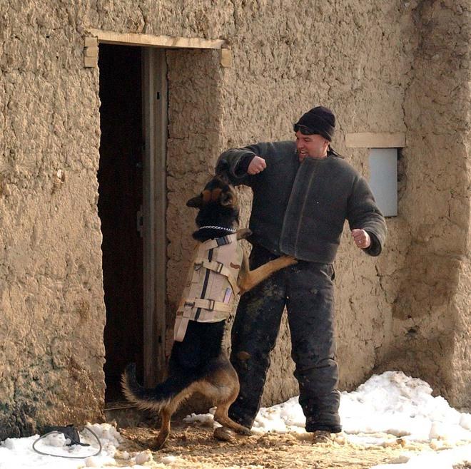 American Humane: Những con chó phục vụ bị quân đội Mỹ bỏ lại ở Afghanistan sẽ phải chịu số phận tệ hơn cái chết - Ảnh 5.