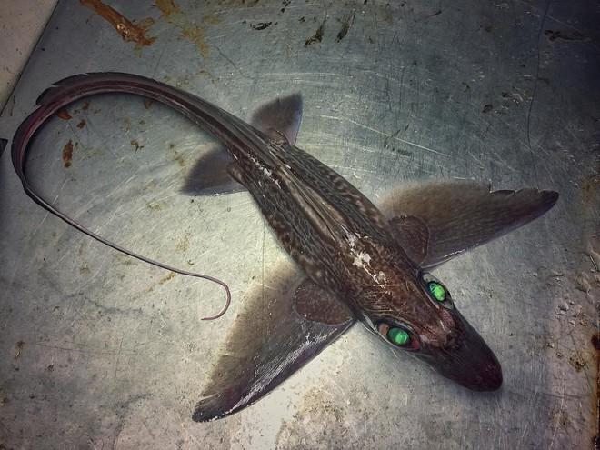 Đây là những quái vật biển sâu được một ngư dân người Nga đưa lên khỏi mặt nước - Ảnh 22.