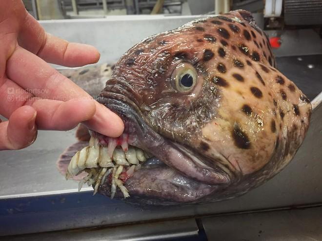 Đây là những quái vật biển sâu được một ngư dân người Nga đưa lên khỏi mặt nước - Ảnh 9.