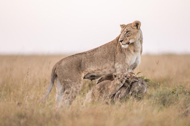 Tận dụng thời gian mắc kẹt ở Kenya do đại dịch, nhiếp ảnh gia tạo ra album ảnh động vật hoang dã ấn tượng - Ảnh 12.