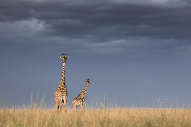 Tận dụng thời gian mắc kẹt ở Kenya do đại dịch, nhiếp ảnh gia tạo ra album ảnh động vật hoang dã ấn tượng - Ảnh 6.