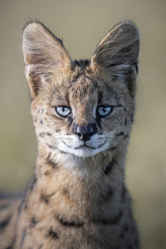 Tận dụng thời gian mắc kẹt ở Kenya do đại dịch, nhiếp ảnh gia tạo ra album ảnh động vật hoang dã ấn tượng - Ảnh 9.