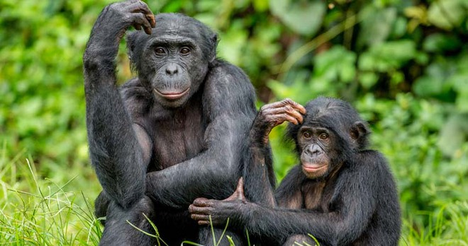 Những sự thật lạ lùng về các loài động vật mà bạn không hề hay biết! - Ảnh 2.