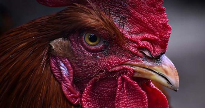 Những sự thật lạ lùng về các loài động vật mà bạn không hề hay biết! - Ảnh 3.