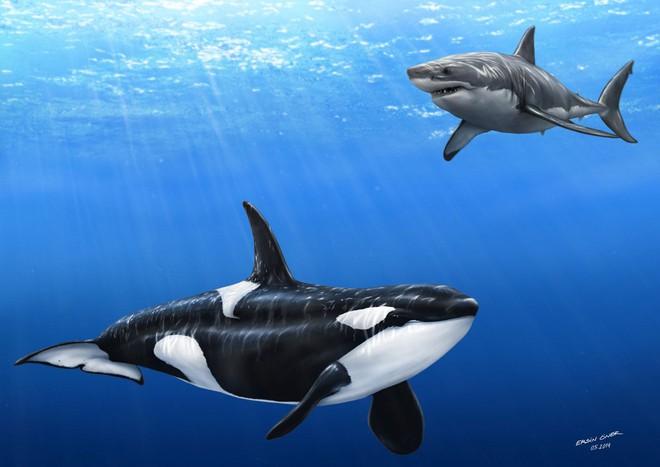 Loài vật khiến cá mập trắng khiếp sợ, hễ nhìn thấy là chúng trốn ngay sang vùng biển khác - Ảnh 3.