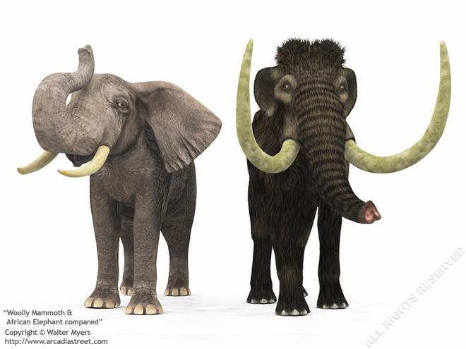 Các nhà khoa học đặt mục tiêu hồi sinh voi ma mút vào năm 2025 - Ảnh 3.