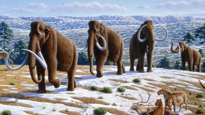 Các nhà khoa học đặt mục tiêu hồi sinh voi ma mút vào năm 2025 - Ảnh 6.