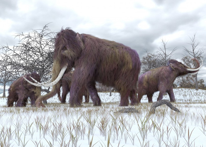 Các nhà khoa học đặt mục tiêu hồi sinh voi ma mút vào năm 2025 - Ảnh 5.