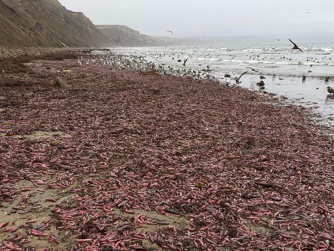 10 sinh vật kỳ dị được biển cả freeship vào đất liền - Ảnh 9.