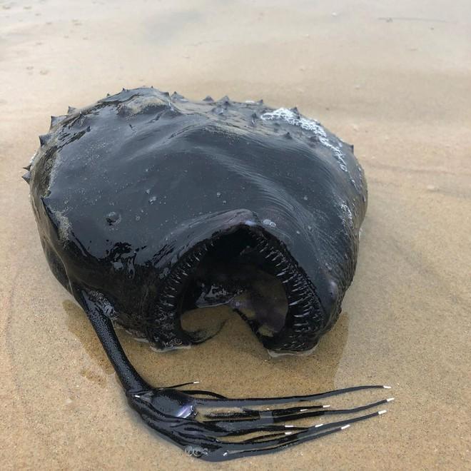 10 sinh vật kỳ dị được biển cả freeship vào đất liền - Ảnh 4.