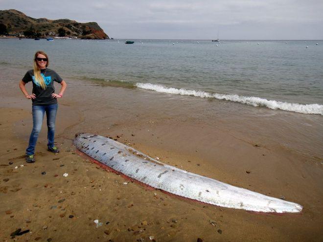 10 sinh vật kỳ dị được biển cả freeship vào đất liền - Ảnh 7.