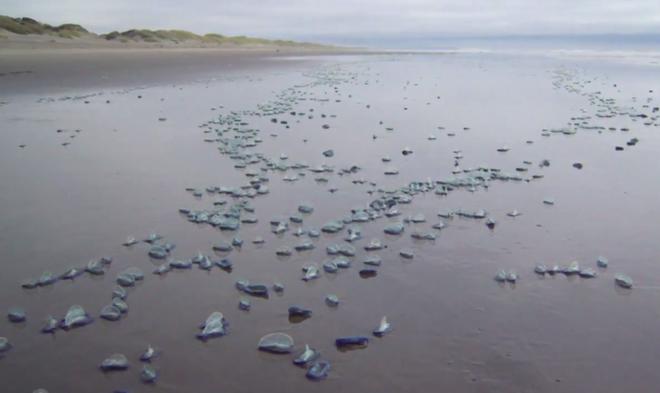 10 sinh vật kỳ dị được biển cả freeship vào đất liền - Ảnh 11.