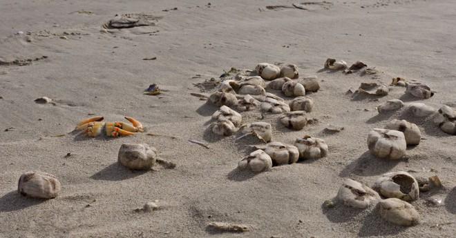 10 sinh vật kỳ dị được biển cả freeship vào đất liền - Ảnh 5.