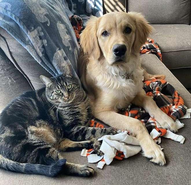 Con mèo tinh ranh biết dụ chó vào nhốt trong chuồng để có thời gian ở riêng với chủ - Ảnh 2.