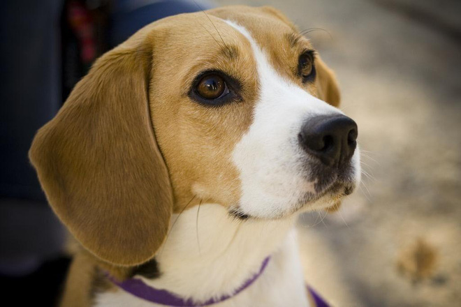 Đâu là những giống chó khó dạy nhất? - Ảnh 4.