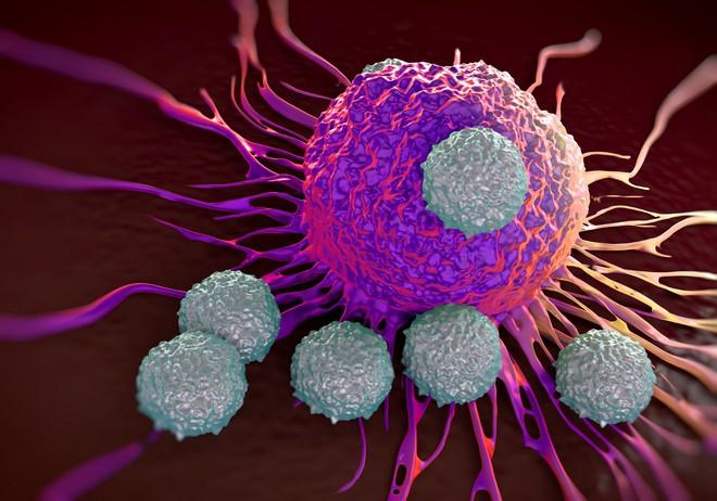CAR-T bước đầu có thể được dùng để điều trị cho khoảng 600 bệnh nhân ung thư mỗi năm ở Mỹ